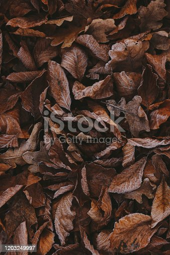 625881376 istock photo Abstract background of dry autumn leaves at winter. Hoarfrost on the leaves, atmospheric photo. Author processing, film effect, selective focus 1203249997