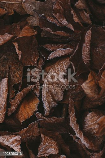 625881376 istock photo Abstract background of dry autumn leaves at winter. Hoarfrost on the leaves, atmospheric photo. Author processing, film effect, selective focus 1203250013