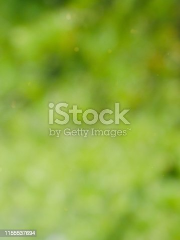 istock Abstract background of forest bokeh, missed focus 1155537694