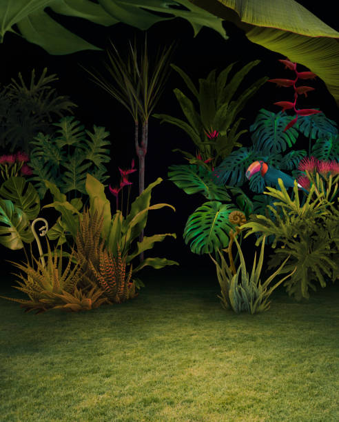 Abstract background of night jungle picture id916056716?b=1&k=6&m=916056716&s=612x612&w=0&h=fg9y5xlpe8z5awe28vcgi frc8vzxh nlflvpsdpkfs=