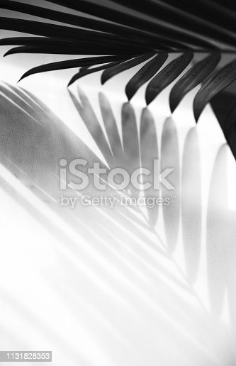 Abstract background of palm leaves shadow on white wall. Vertical photo. Black and white.