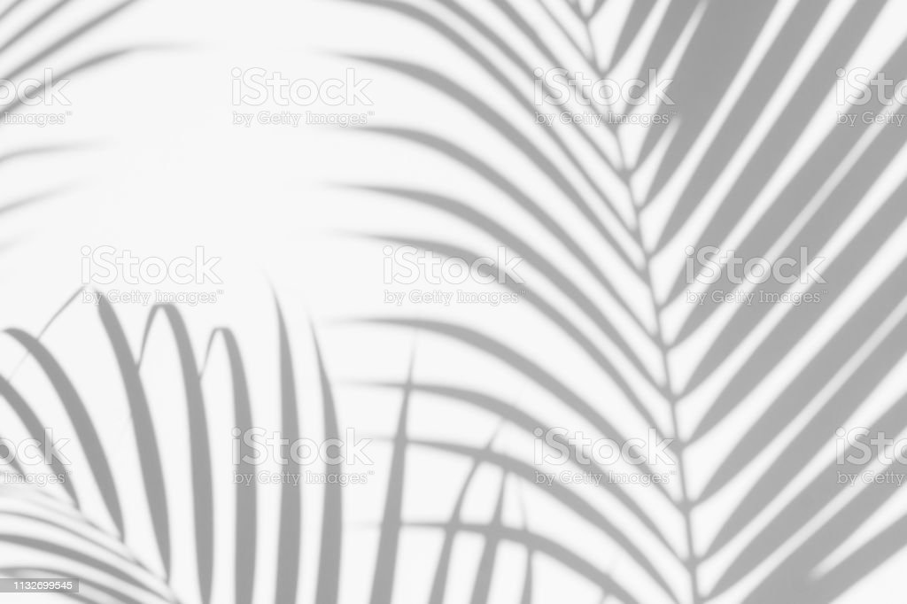 abstract background of shadows palm leaves on a white wall. White and Black. royalty-free stock photo