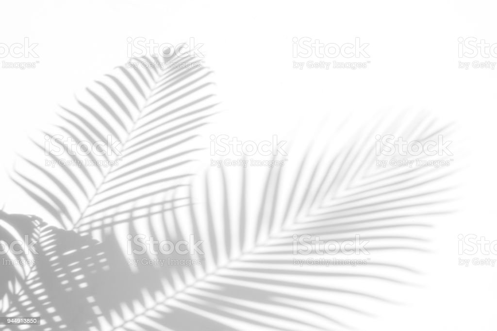 abstract background of shadows palm leaves on a white wall. White and Black royalty-free stock photo