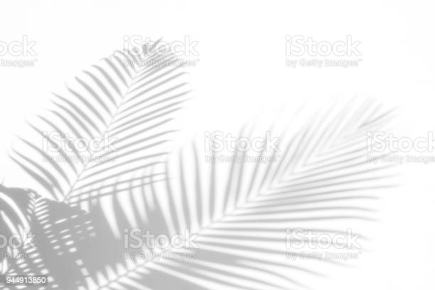 Photo of abstract background of shadows palm leaves on a white wall. White and Black