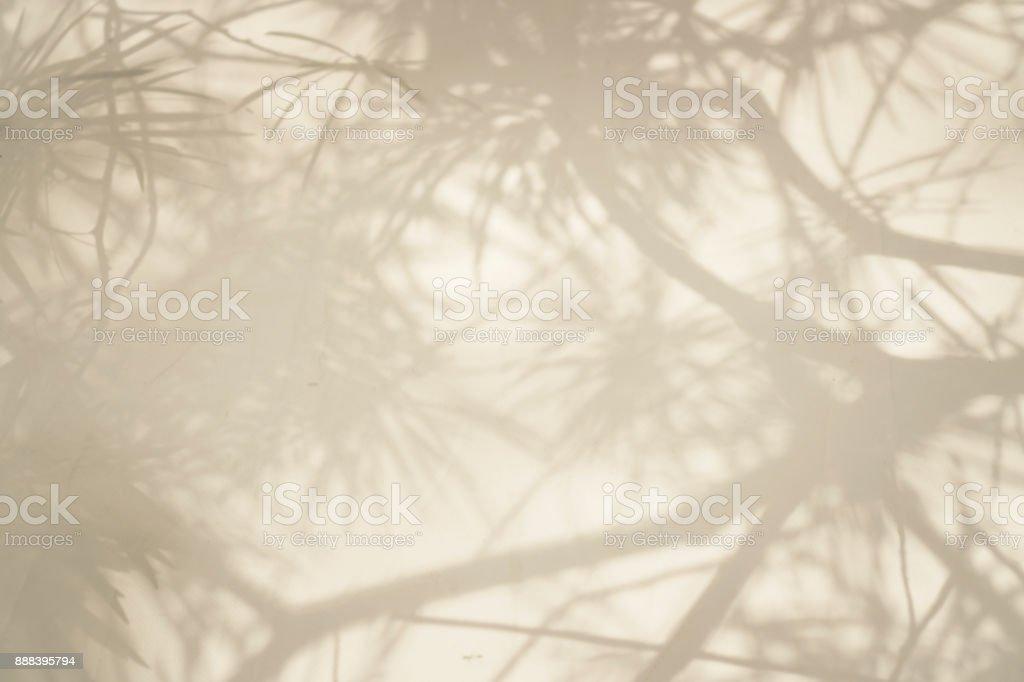 樹分支陰影的抽象背景圖像檔