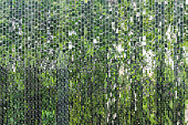 Abstract background reflection of green tree on mirror tile wall