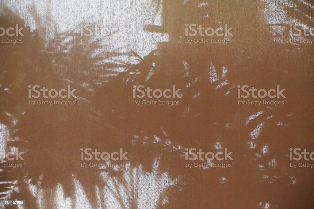 abstract background shadow shade of the palm leaf on curtain foto stock royalty-free