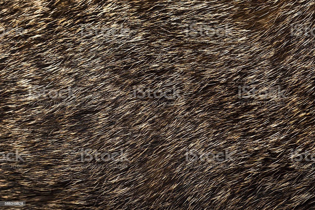 Abstract background texture of fur cat stock photo