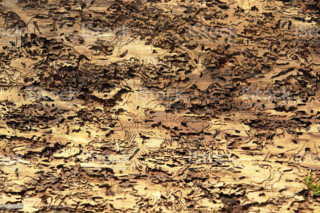 abstract background with bark beetle traces royalty-free stock photo