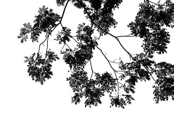 Abstrakt Hintergrund mit Blätter silhouette – Foto