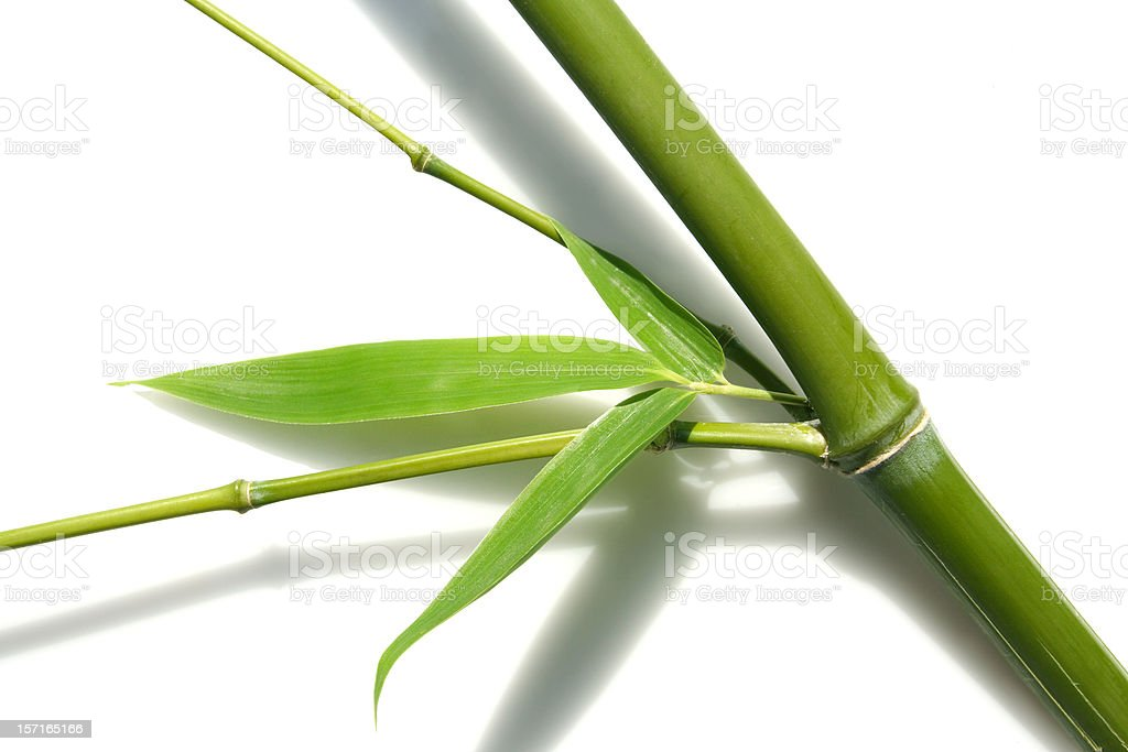 abstract bamboo 2, isolated stock photo