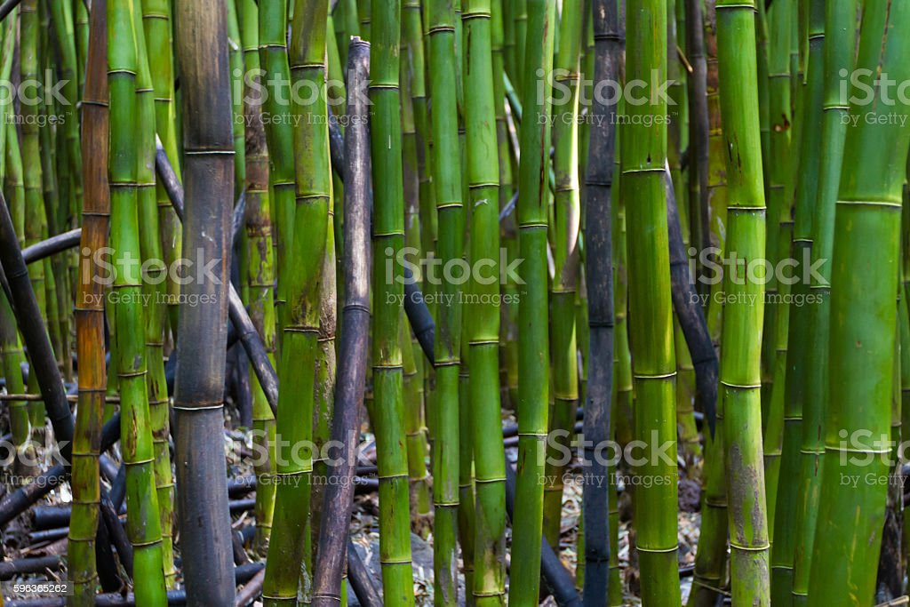 Abstract bamboo background stock photo