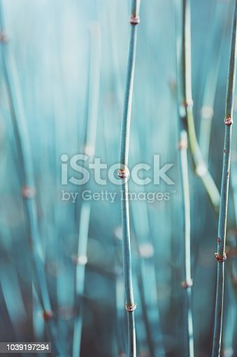 Abstract bamboo plant in warm sunshine