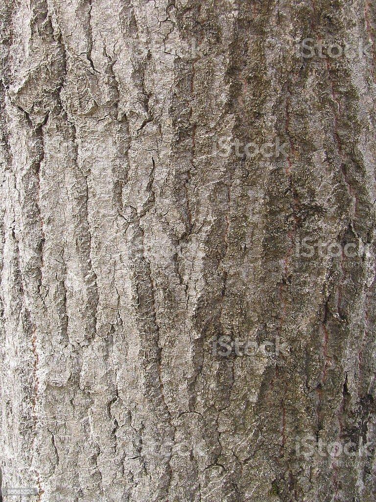 추상적임-나무껍질로 트리 royalty-free 스톡 사진