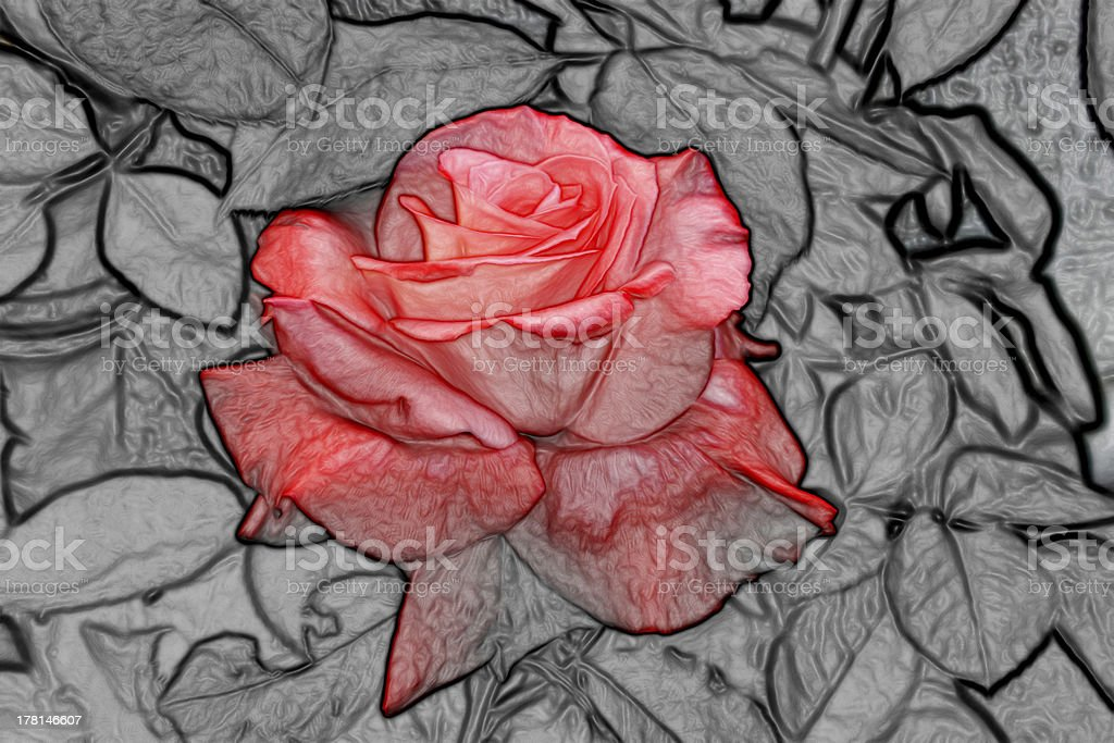Abstract Beautiful Orange Rose on Black and White royalty-free stock photo