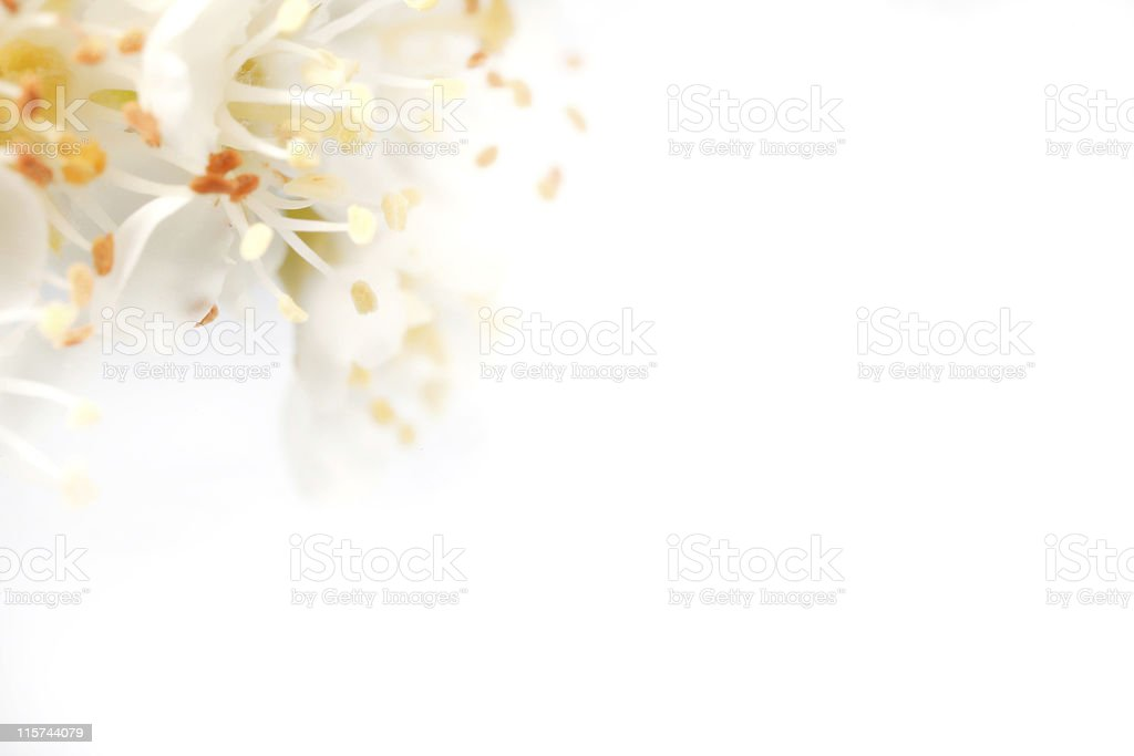 Abstract Blossom Background royalty-free stock photo