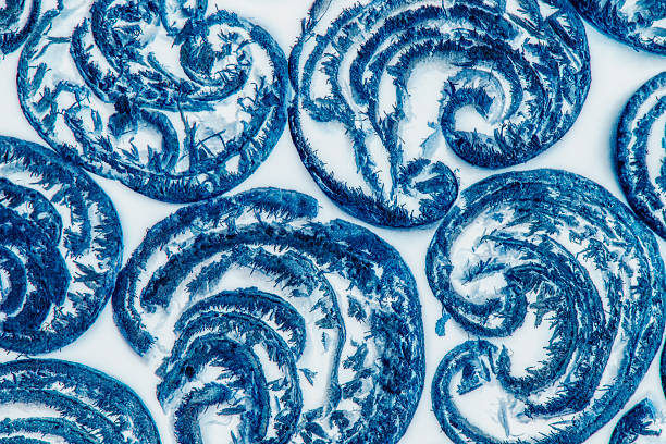 Abstract Blue and White Macro Pattern stock photo