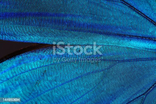 istock Abstract blue texture of shiny butterfly wings 144950694