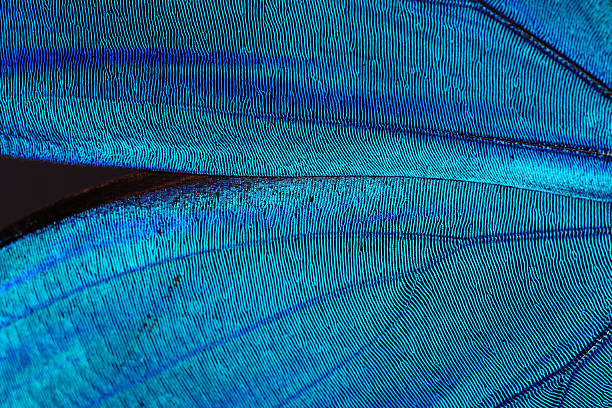 Abstract blue texture of shiny butterfly wings picture id144950694?b=1&k=6&m=144950694&s=612x612&w=0&h=aowxc5 ndup6ct82z5yqdsgcnzglt7svxtyuqniatpy=