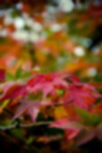 Abstract blur background texture of yellow green and red leaves