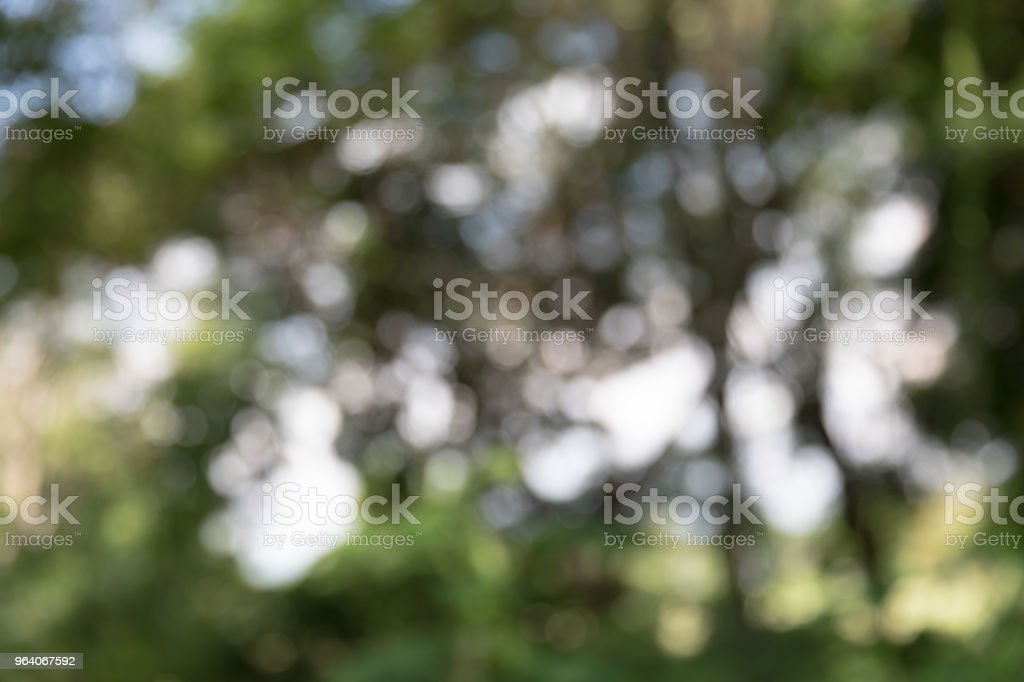 abstract blur green Natural for background - Royalty-free Beauty Stock Photo