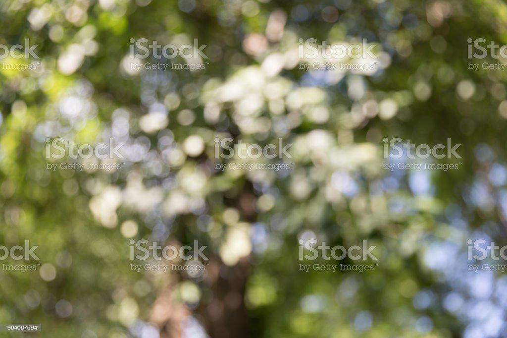抽象的なぼかしの背景に緑の自然 - まぶしいのロイヤリティフリーストックフォト