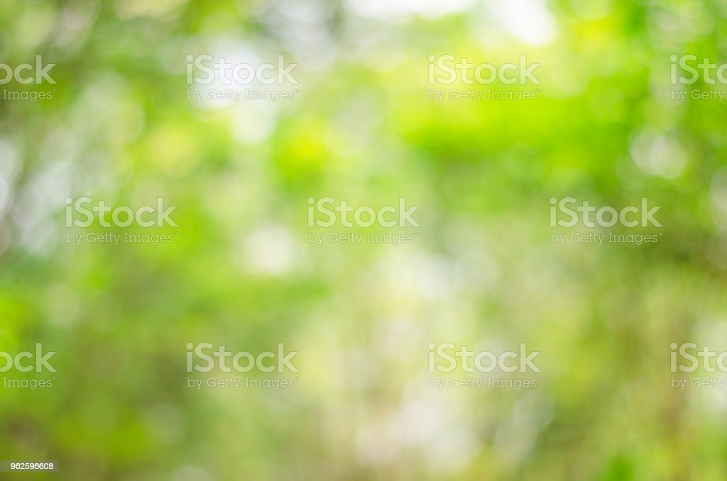 abstract blur green nature bokeh background from tree leaves. stock photo