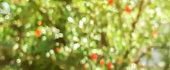사과나무에 달린 빨간 사과