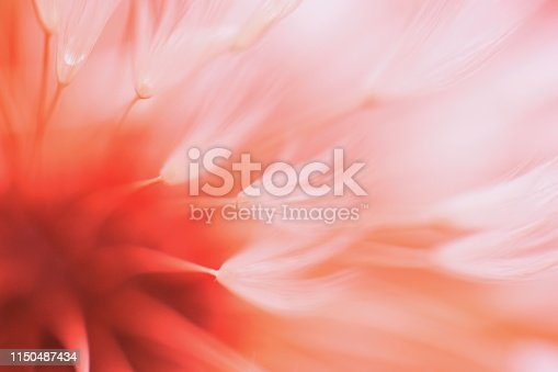Beautiful abstract blured dandelion flower in coral color