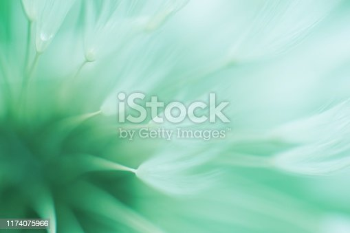 Abstract blured dandelion flower in trendy neo mint color