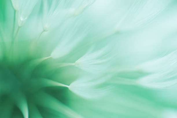 Abstract blured dandelion flower in trendy neo mint color stock photo