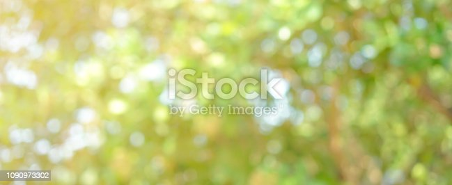 1067054470istockphoto abstract blurred clean nature forest with sunny and bokeh light in public park  panoramic horizontal background 1090973302