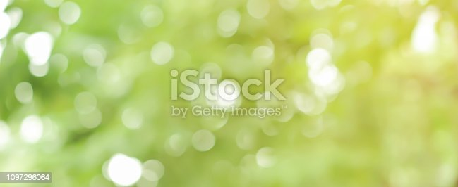 1067054470istockphoto abstract blurred clean nature forest with sunny and bokeh light in public park  panoramic horizontal background 1097296064