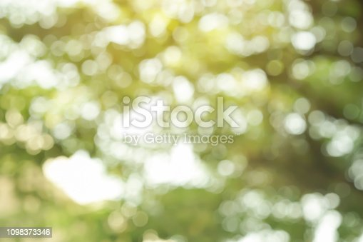 1067054470istockphoto abstract blurred clean nature forest with sunny and bokeh light in public park  panoramic horizontal background 1098373346