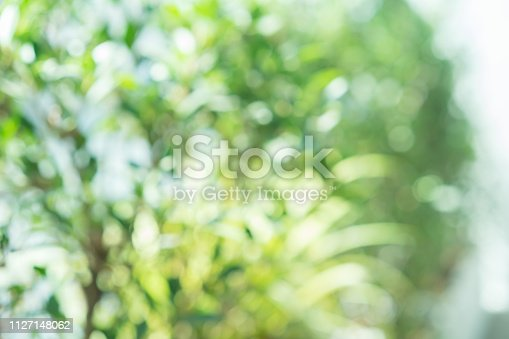 1067054470istockphoto abstract blurred clean nature forest with sunny and bokeh light in public park  panoramic horizontal background 1127148062