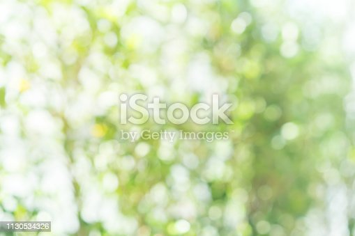 1067054470istockphoto abstract blurred clean nature forest with sunny and bokeh light in public park  panoramic horizontal background 1130534326