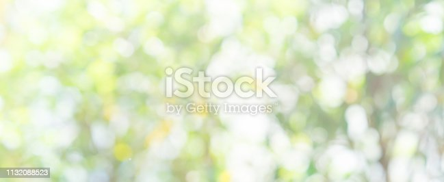 1067054470istockphoto abstract blurred clean nature forest with sunny and bokeh light in public park  panoramic horizontal background 1132088523