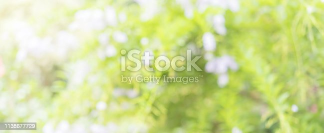 1067054470istockphoto abstract blurred clean nature forest with sunny and bokeh light in public park  panoramic horizontal background 1138677729