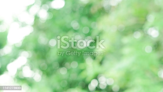 1067054470istockphoto abstract blurred clean nature forest with sunny and bokeh light in public park  panoramic horizontal background 1141273933