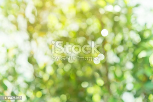 1067054470istockphoto abstract blurred clean nature forest with sunny glow and bokeh light in public park  horizontal background 1128025767