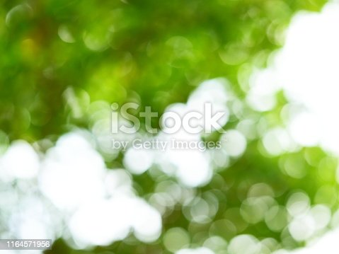 876018792istockphoto Abstract blurred green color nature public park 1164571956