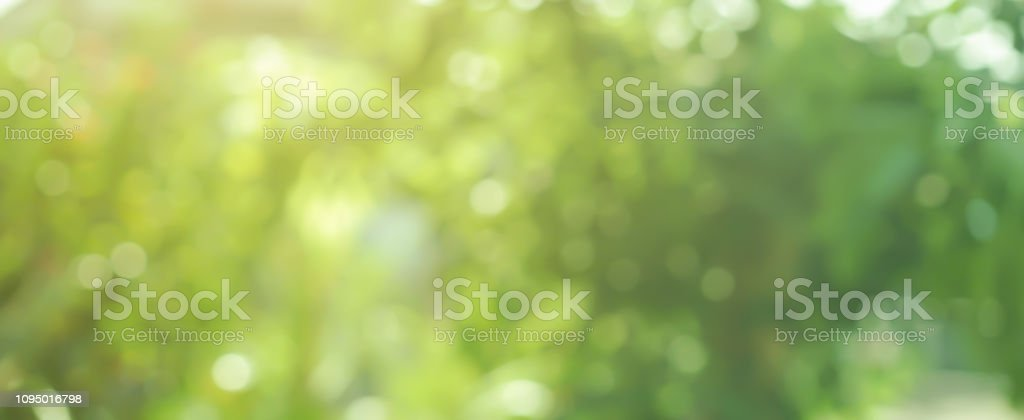abstract blurred greenery leaves of tree forest at nation public park outdoor in autumn season panoramic scene background design concept - Foto stock royalty-free di Agricoltura