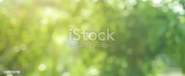 abstract blurred greenery leaves of tree forest at nation public park outdoor in autumn season panoramic scene background design concept