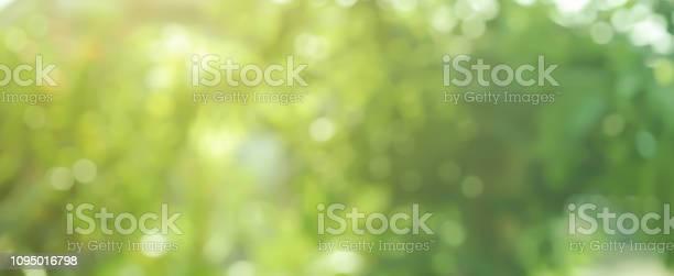 Abstrakte Verschwommene Grün Blätter Baum Wald Im Öffentlichen Nationalpark Outdoor Im Herbst Panoramaszenehintergrunddesignkonzept Stockfoto und mehr Bilder von Abstrakt