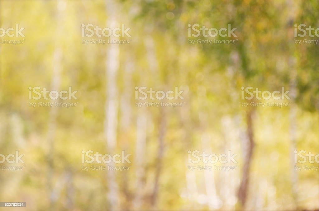Abstract blurred image of autumn forest, to use a background. stock photo