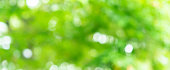 abstract blurred leaves of tree in nature forest with sunny and bokeh light  at  public park panoramic horizontal background for world environment day concept