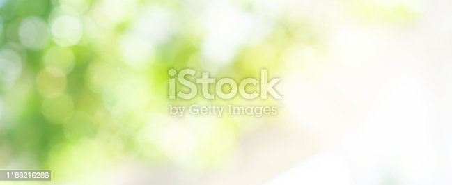 abstract blurred leaves of tree in nature forest with sunny and bokeh light  at  public park background for good environment concept