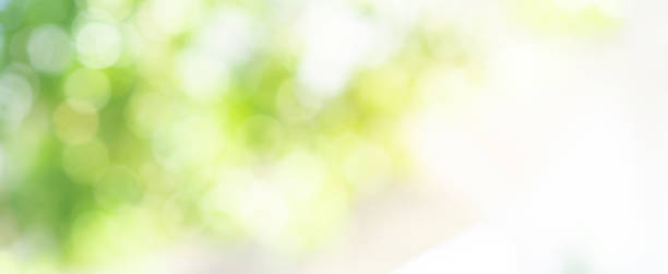 abstract blurred leaves of tree in nature forest with sunny and bokeh light  at  public park background for good environment concept abstract blurred leaves of tree in nature forest with sunny and bokeh light  at  public park background for good environment concept lush foliage stock pictures, royalty-free photos & images