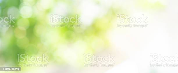 Photo of abstract blurred leaves of tree in nature forest with sunny and bokeh light  at  public park background for good environment concept
