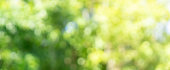 istock abstract blurred leaves of tree in nature forest with sunny and bokeh light  at  public park background for good environment concept 1202540569
